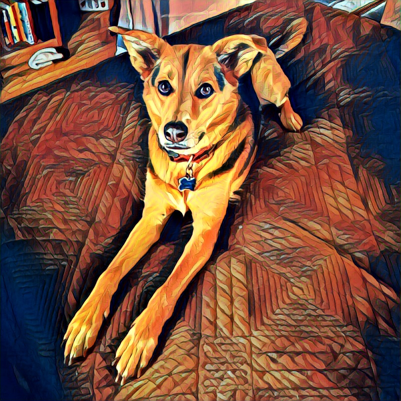 Dobby the dog at home in Minneapolis